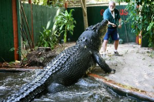 cassius the crocodile (5)