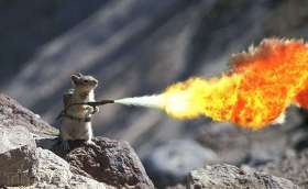 post-21012-Squirrel-flame-thrower-GIVE-ME-deNV